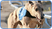 Back or lay the greyhound event at WBX