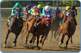 Horse racing at sports betting exchange
